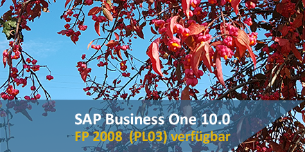 SAP Business One 10.0 fp2008